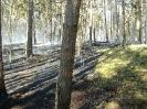 Požár lesa Předenice